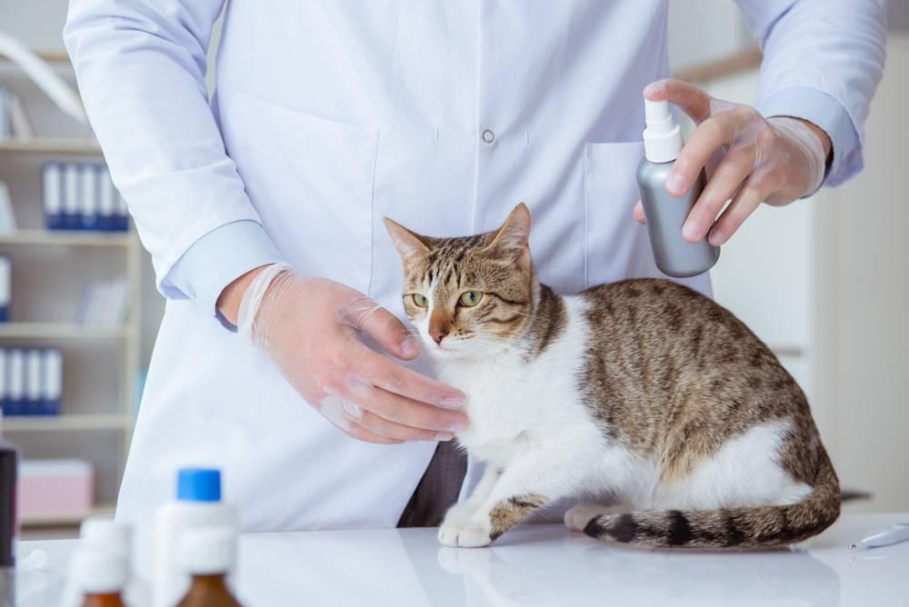 Пищевая аллергия у кошек и котов