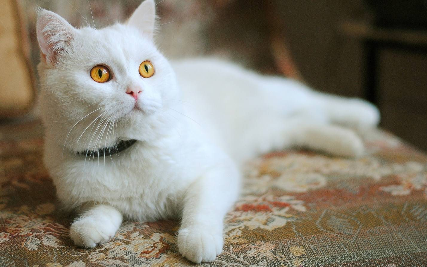 Какие витамины давать кошке при выпадении шерсти