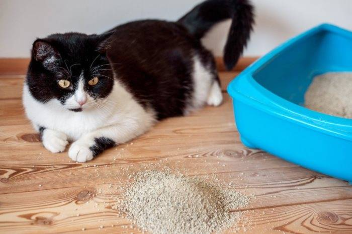 Глисты у кошек, котов и котят: причины, симптомы, диагностика и лечение