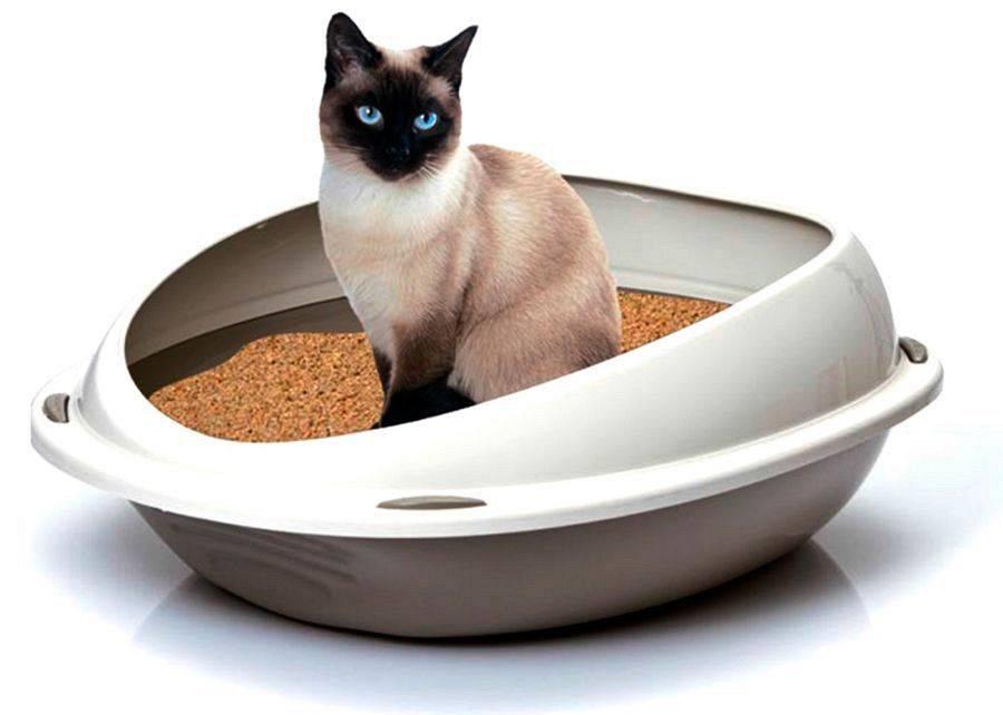 Кошка не ходит в туалет день, неделю и больше: что делать и как лечить