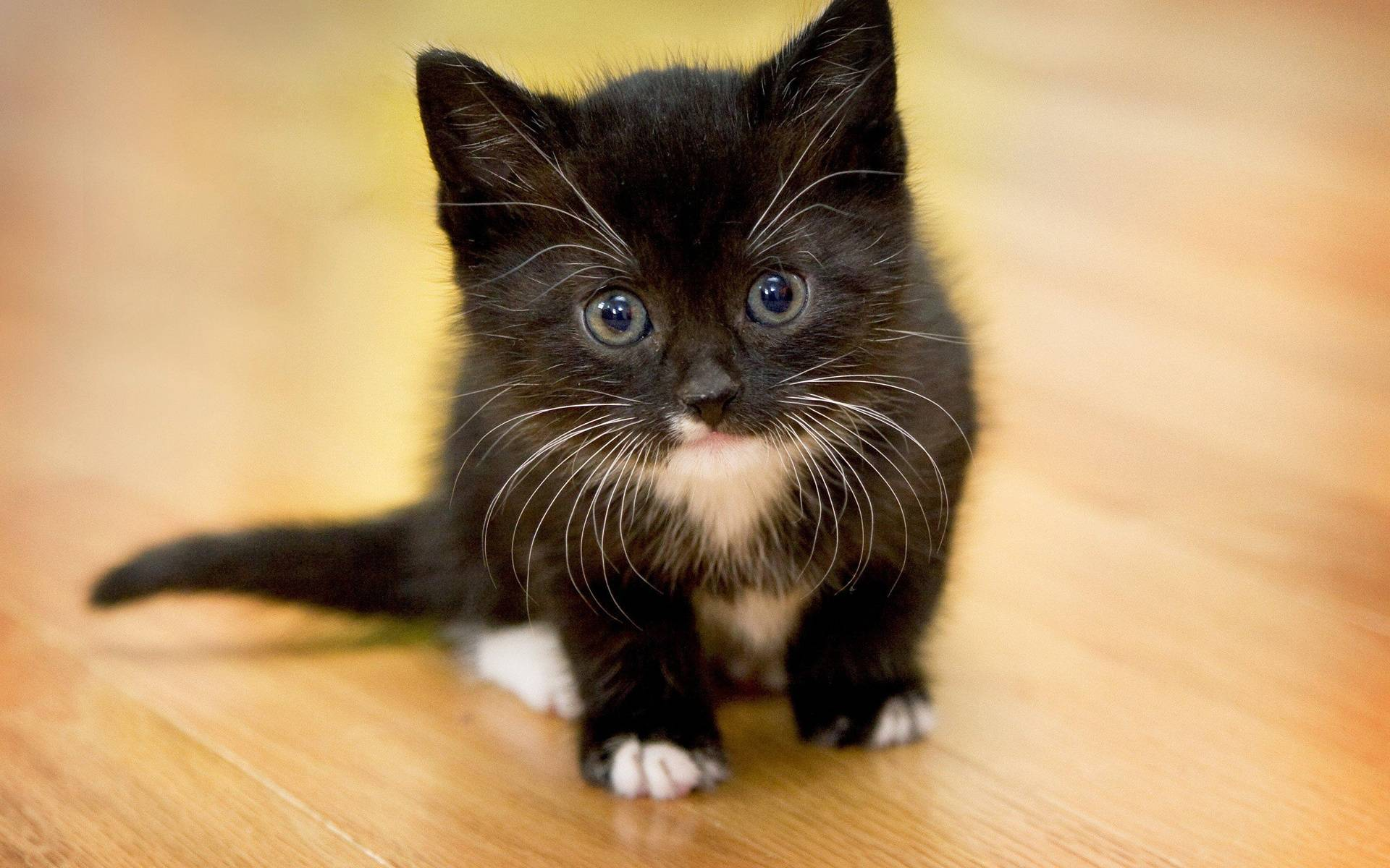 От чего котенка может тошнить