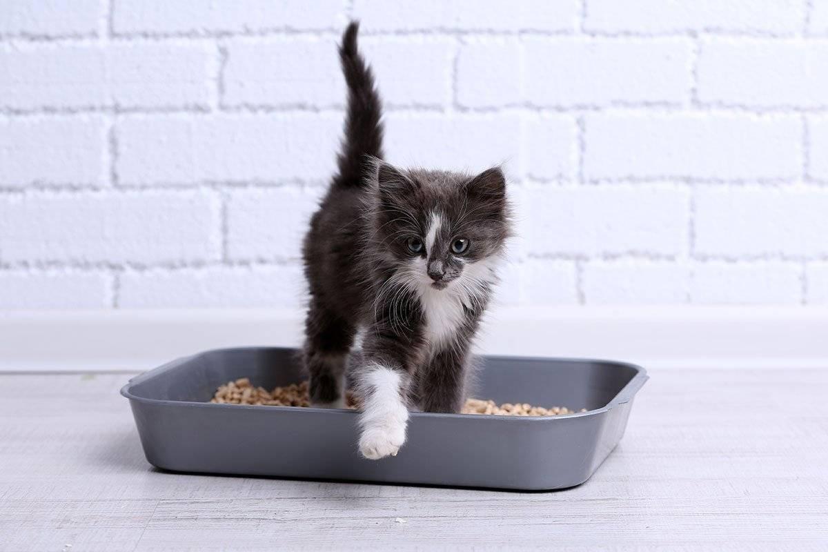 Как избавить кота от запора
