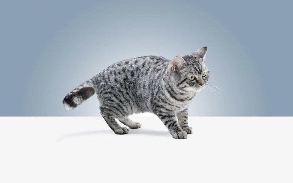 Запах валерьянки для котов