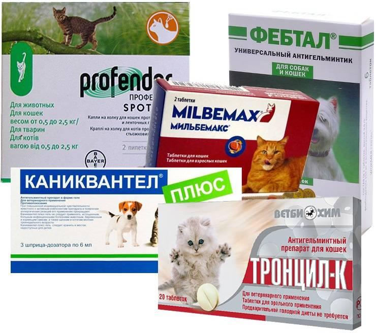 Простые и полезные советы, как дать кошке таблетку от глистов. Как правильно дать кошке таблетку от глистов Когда давать коту таблетку от глистов