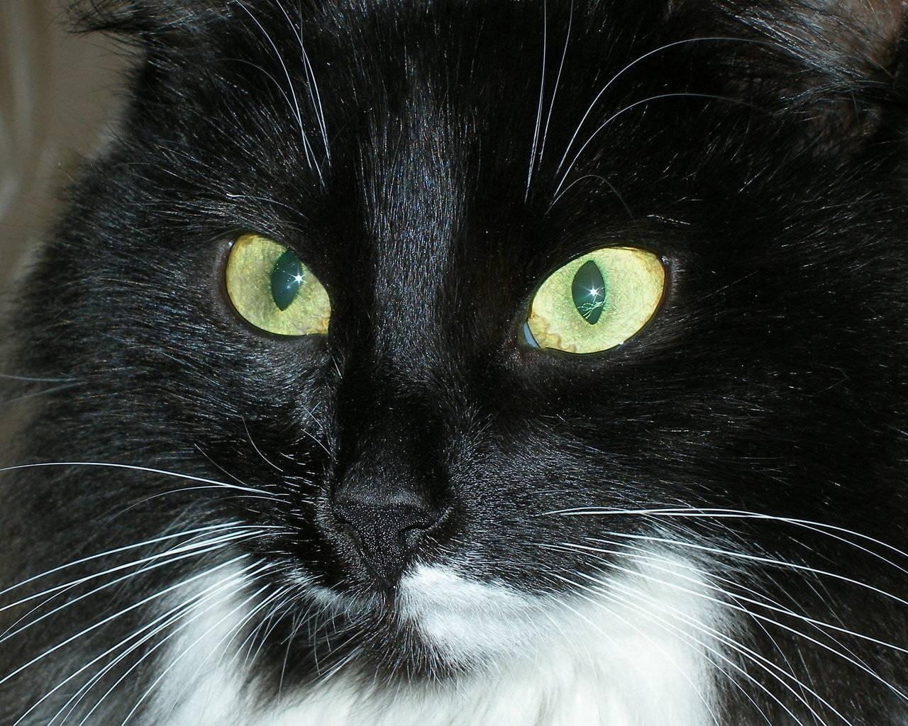 Почему возникают корочки на носу у котов