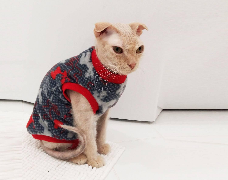 Как делать для кошек одежду