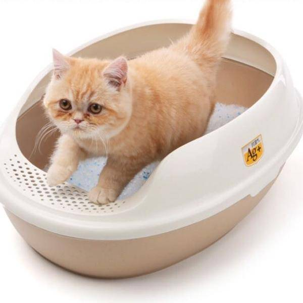 Как помочь котенку при поносе: способы домашнего лечения самостоятельно