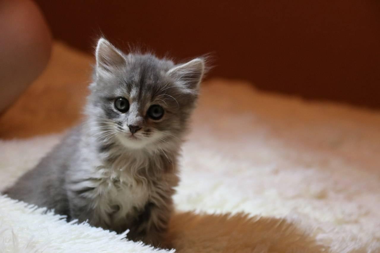 Чего дать коту от поноса в домашних условиях thumbnail