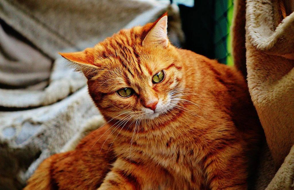Рыженькие котики картинки