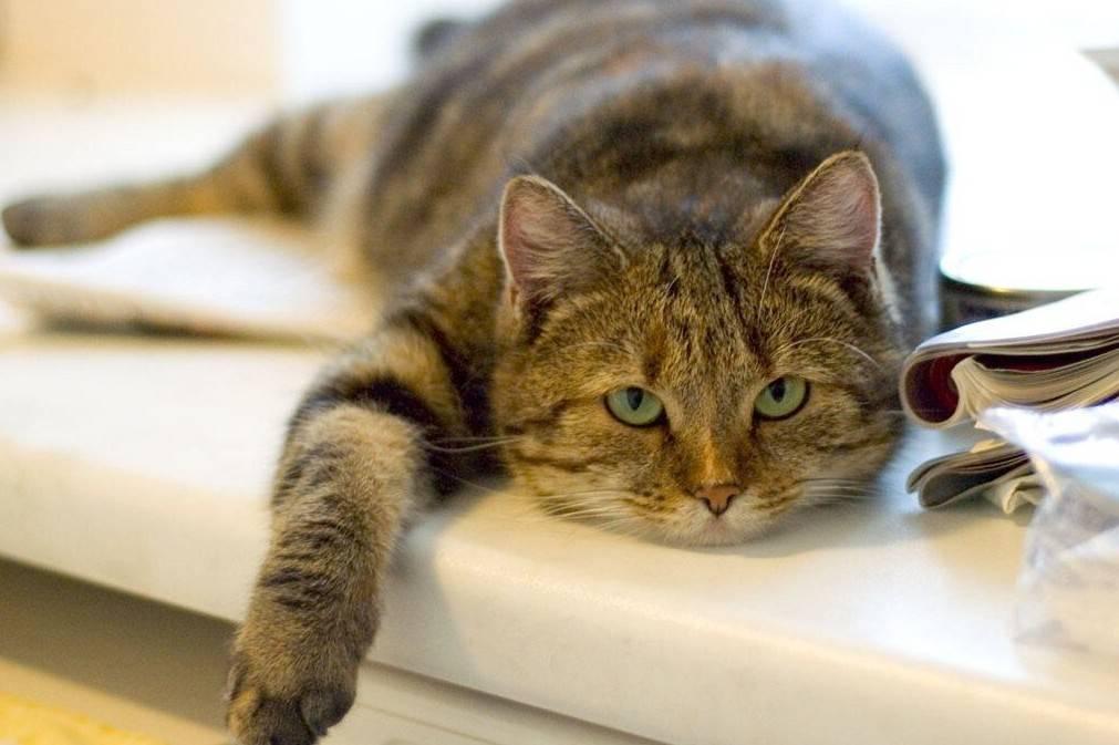 Кошка постоянно спит нормально ли это