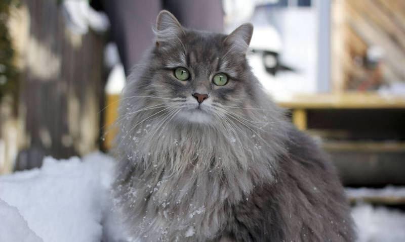Какое лекарство от аллергии на кошек лучше