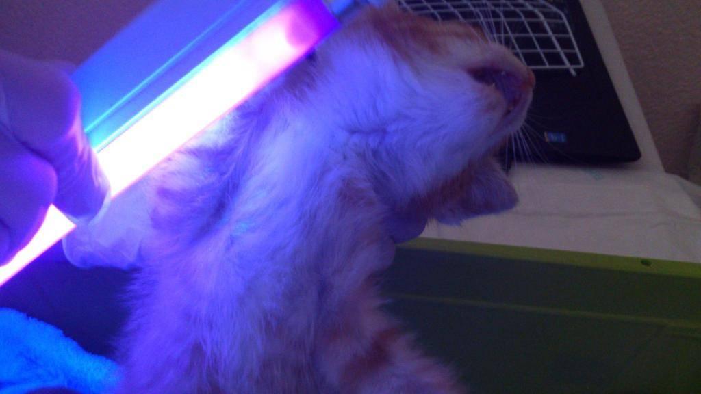 Причины почему кот может постоянно облизываться и глотать слюну: как помочь