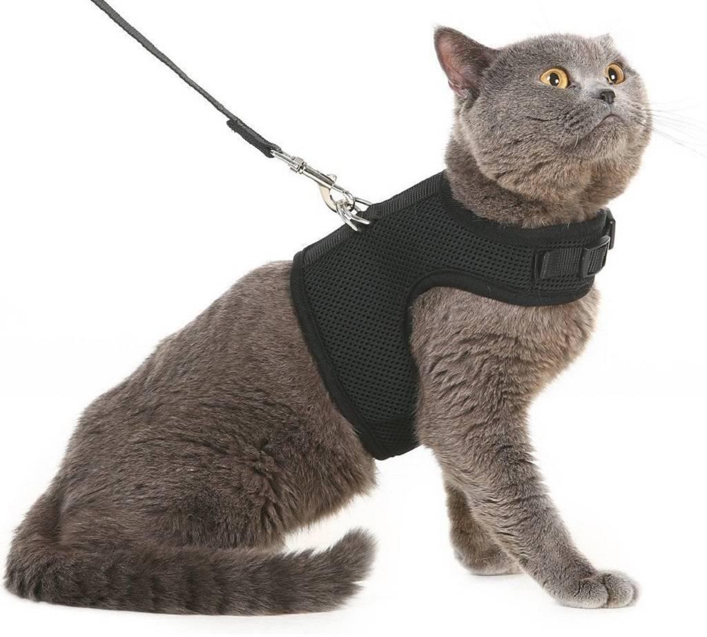 Как надеть шлейку на кошку Пошаговая инструкция для приспособлений разных видов