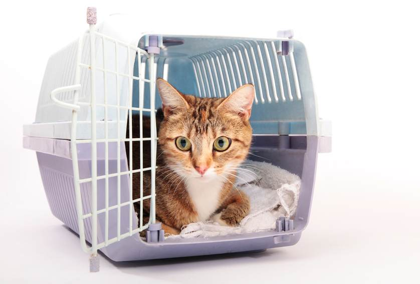 Советы по уходу за кошкой после стерилизации