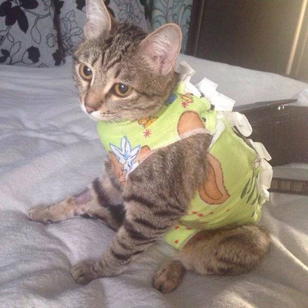 Причины дрожи у котенков и взрослых кошек: что делать при ознобе у питомца