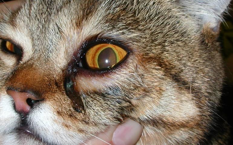 У кота слезятся глаза и текут коричневые выделения симптоматика и первая помощь