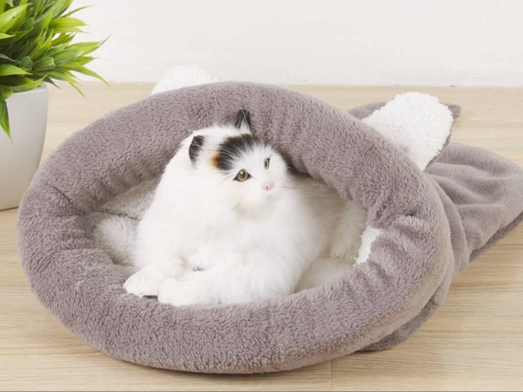Как приучить кошку спать по ночам