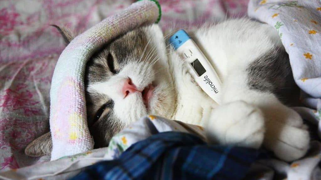 Почему кошка чихает и чем это может быть опасно