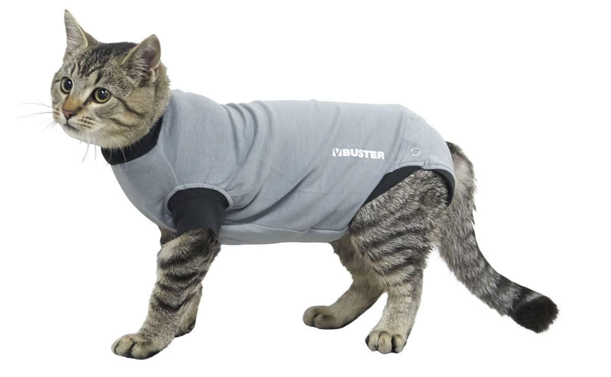 Пуповая грыжа у котенка