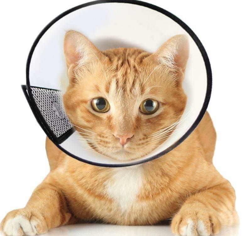 Как и когда мыть кота после кастрации или стерилизации