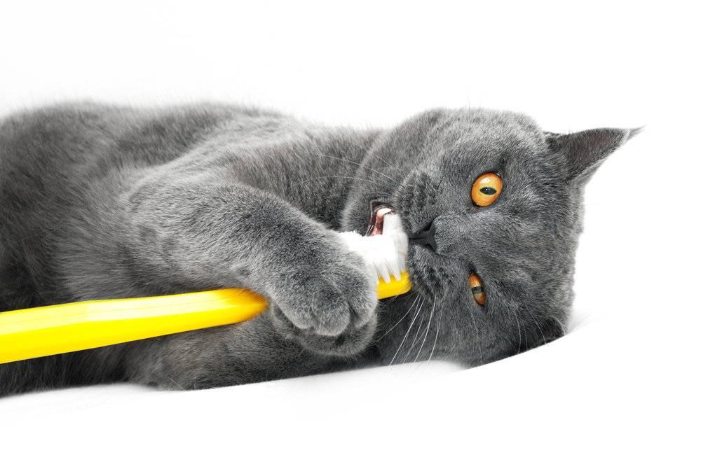Когда у котят меняются зубы на постоянные, в каком возрасте
