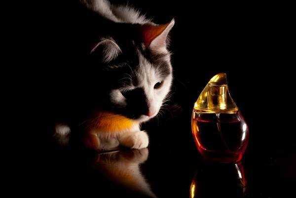 Примеры запахов которые отпугивают кошек: что не любят и средства что бы не гадили