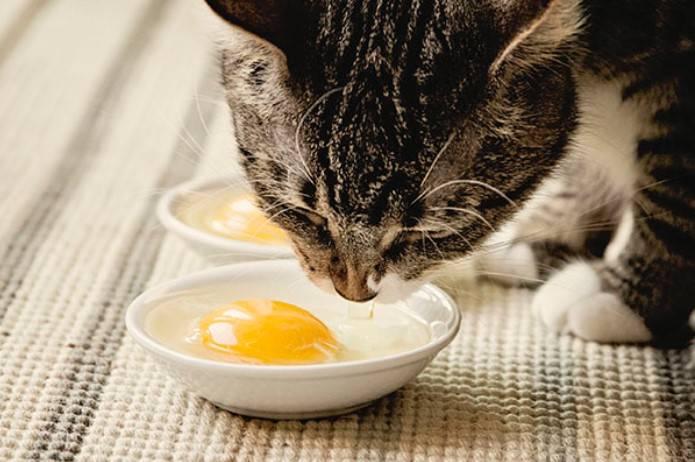 Корм для котят от 1 месяца: ТОП-10 лучших