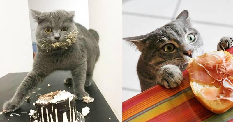 Как назвать кошек и котов британской породы: клички для мальчиков и девочек