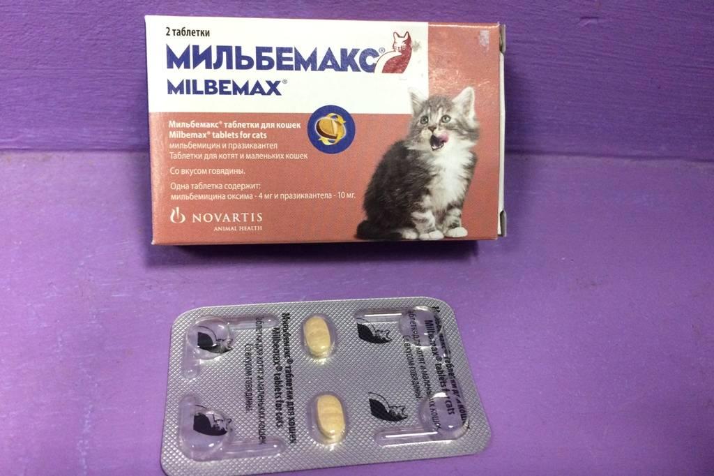 Мильбемакс для кошек и котят: инструкция по применению, аналоги, отзывы