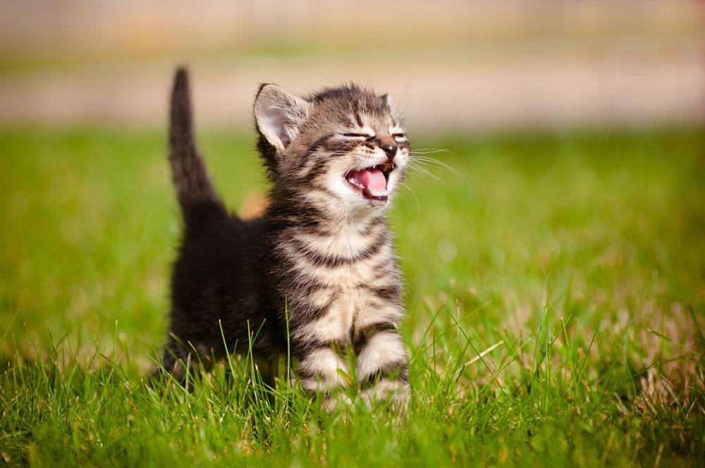 Почему кошка постоянно чихает и стоит ли волноваться