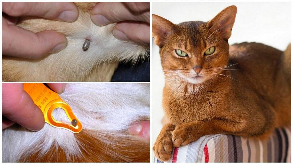 Почему возникает вялость у кошек, котов и котят: чем можно помочь питомцу