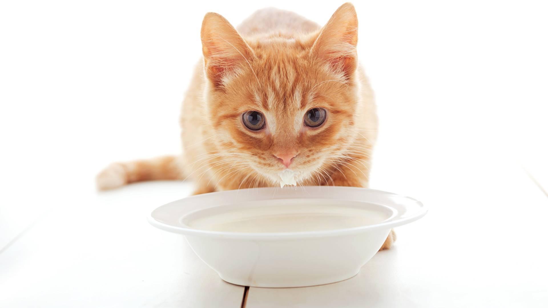 Что делать когда котенка тошнит