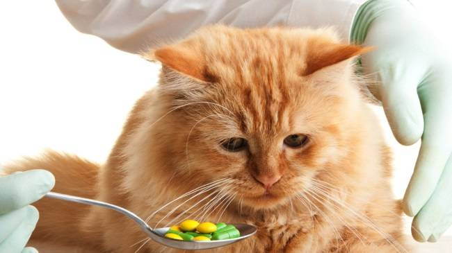 Какие витамины давать кошке чтобы не линяла