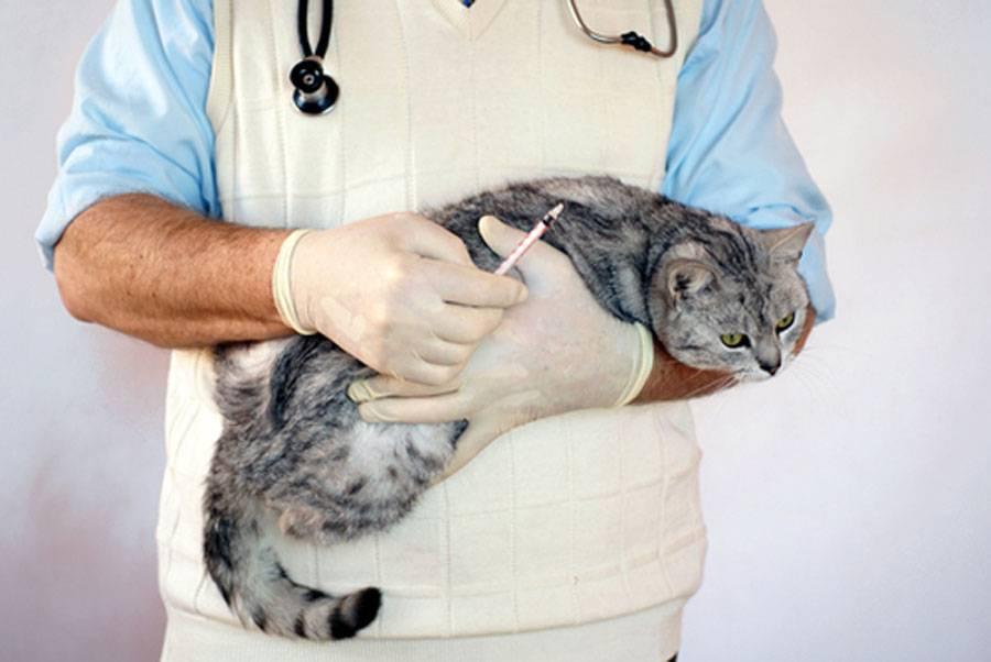 Печеночная недостаточность у кошек лечение