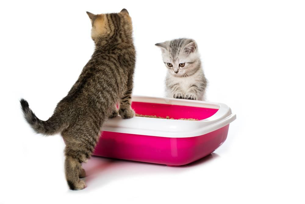 Разновидности и рейтинг наполнителей для кошачьего туалета
