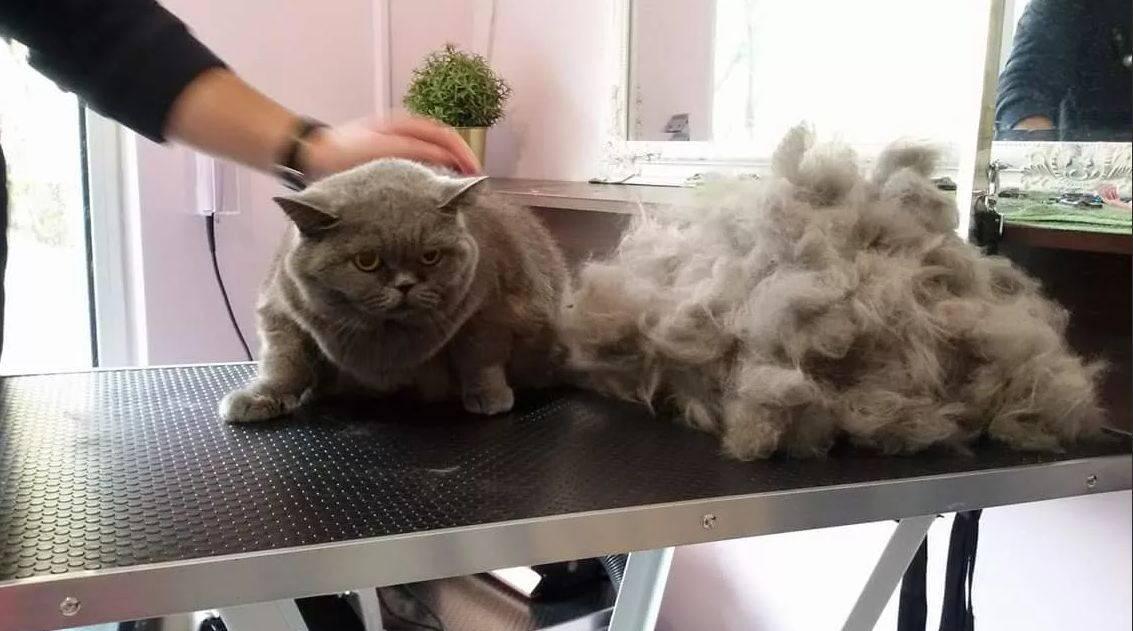 Если кошка сильно линяет - что делать?
