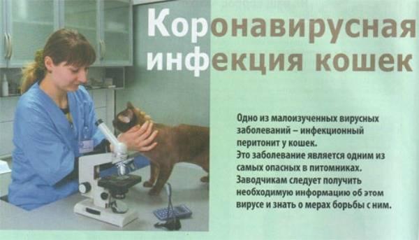 Что такое коронавирусная инфекция Кошачья коронавирусная инфекция