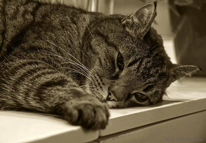 Котик вялый много спит какие витамины дать