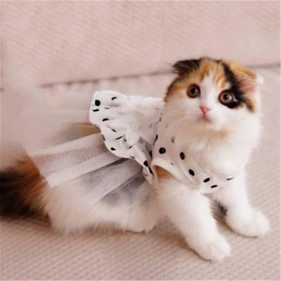картинки котята в платьях загородном
