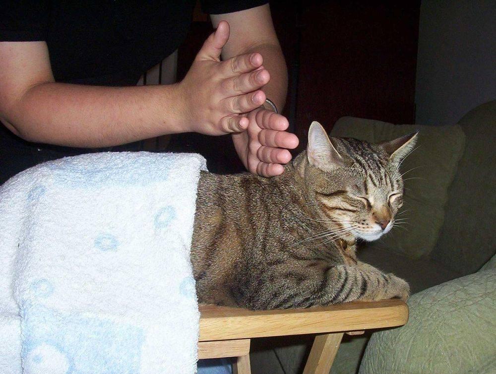 Какое дать обезболивающее для кошек
