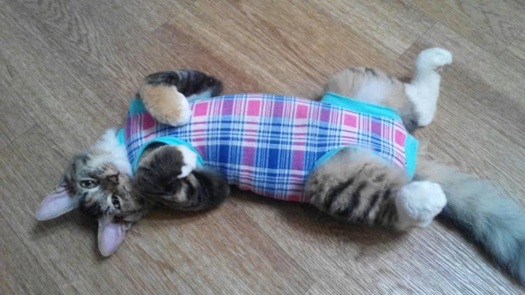 Сколько кошка отходит после наркоза после стерилизации