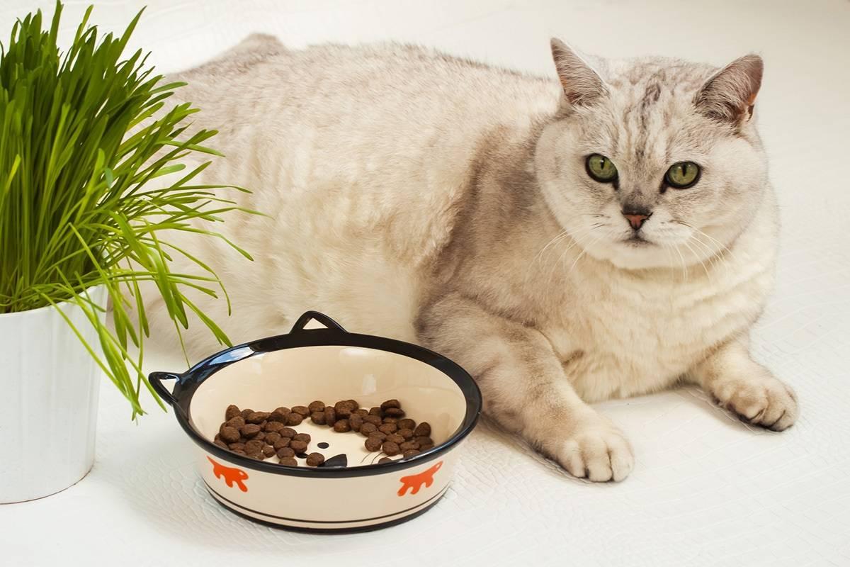 Цистит у котов симптомы лечение