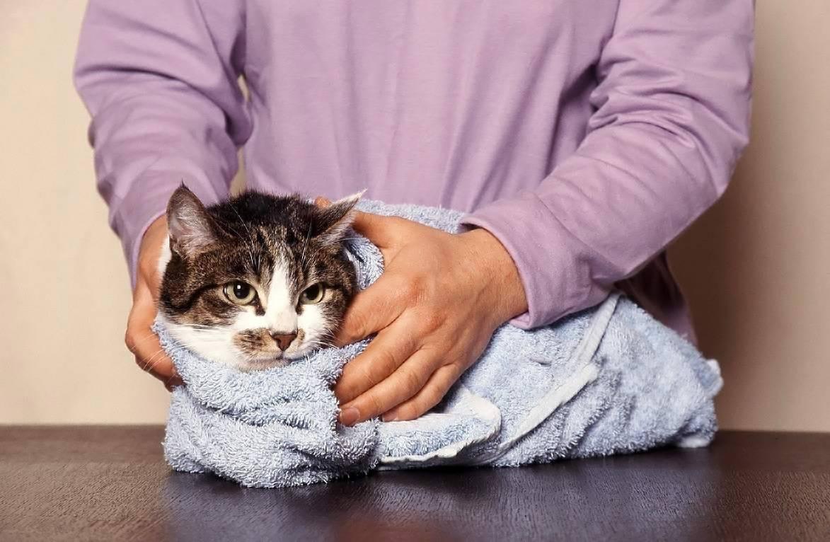 Как сбить температуру у кошки народные средства