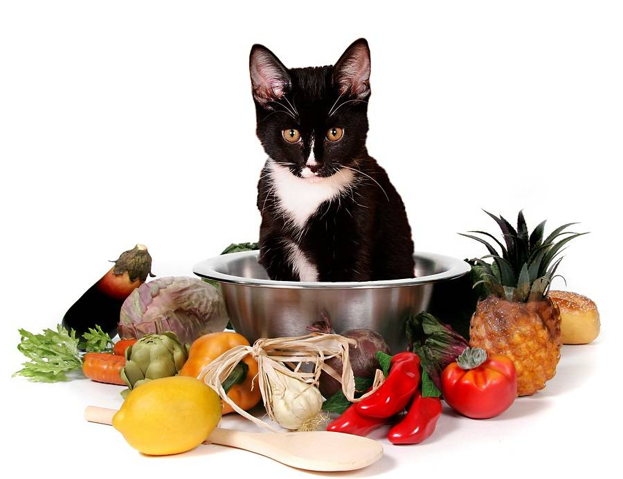 Цистит у кошек симптоматика признаки методы лечения последствия