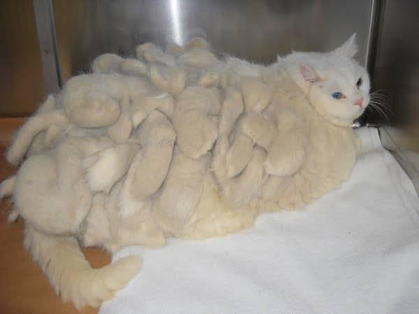 Почему у кошки образуются колтуны