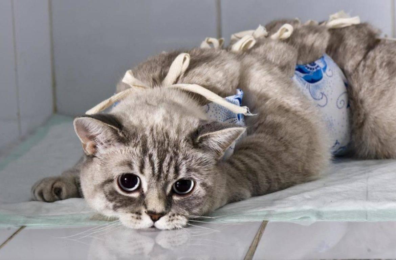 Примеры сколько по времени могут отходить кошки от наркоза после операции