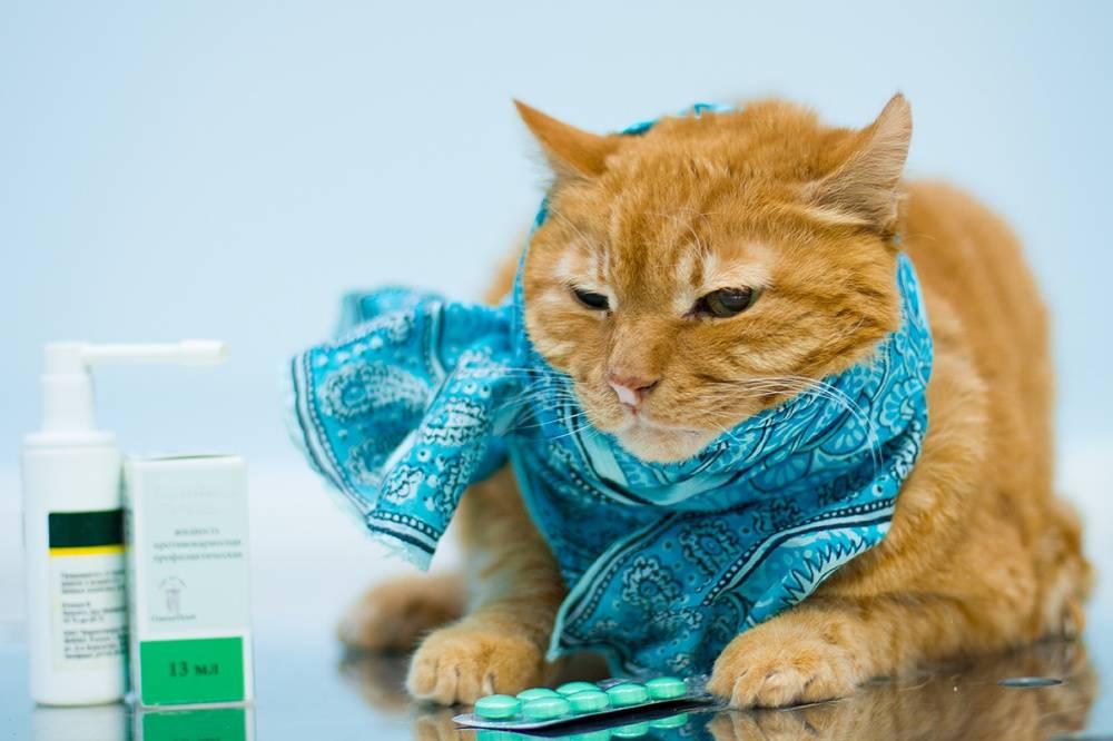 Что делать если у котенка насморк