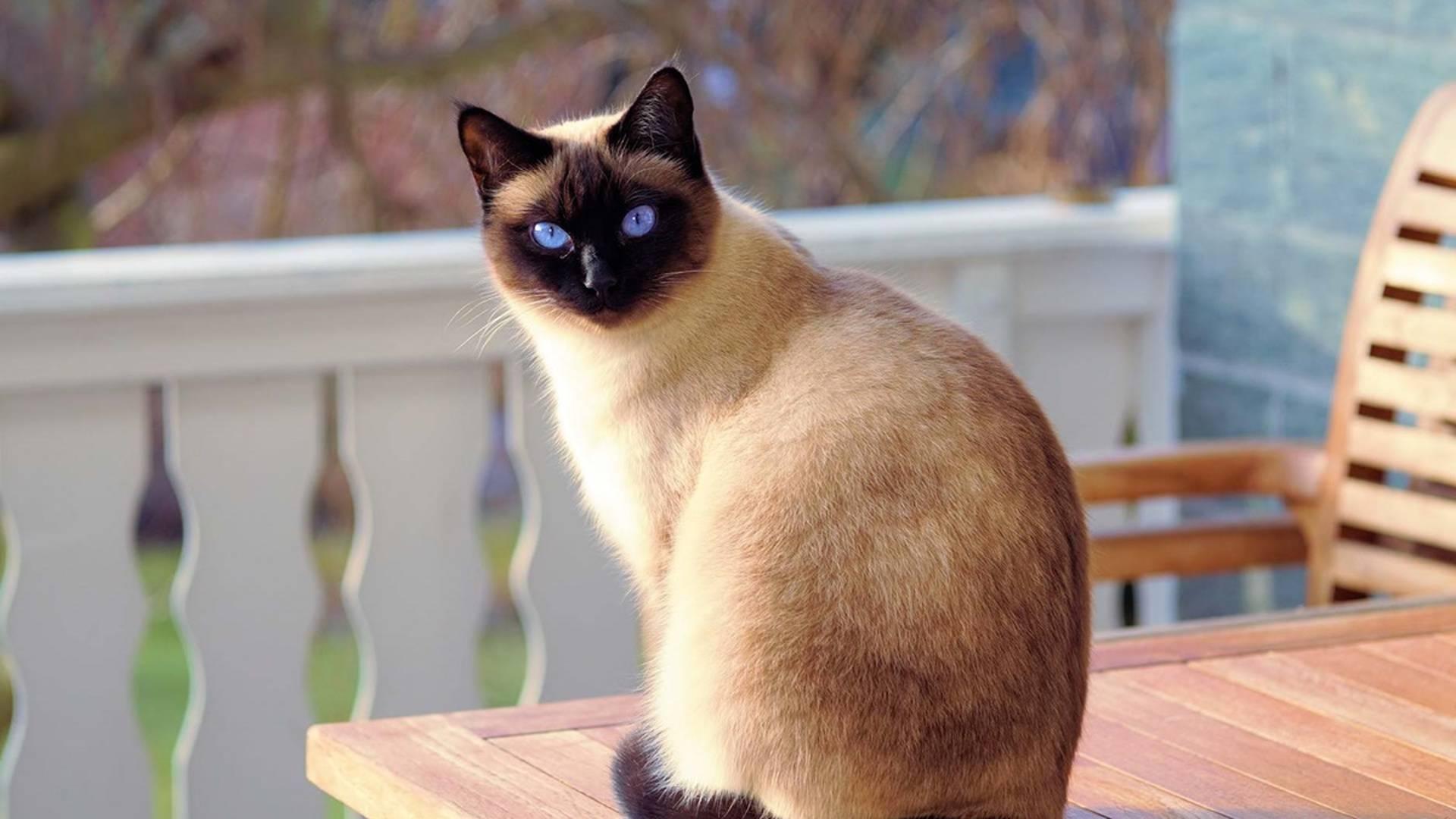 Почему у кошки на лапах шишки