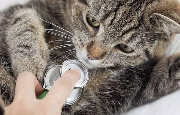 Антибиотики для кошек: виды, назначение, плюсы и минусы