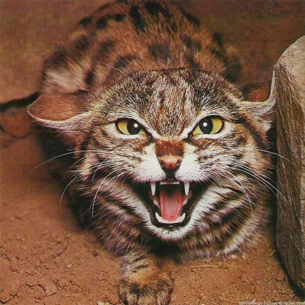 Агрессия у кота: что делать, чтобы не быть покусанным